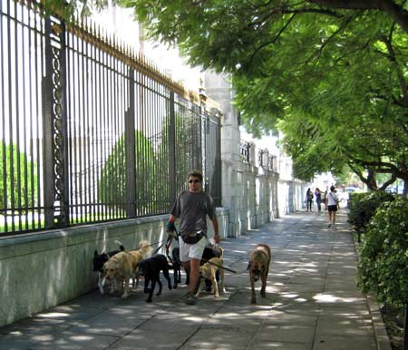 Professional Dog Walkers, There are many of Them in Buenos Aires