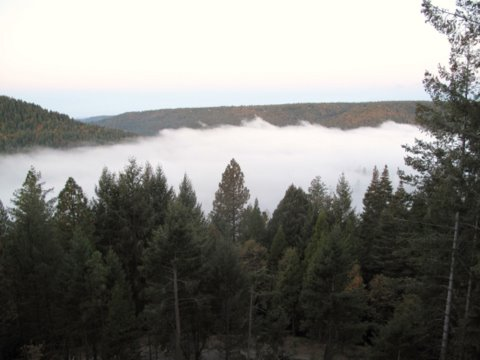 Fog over Scotts Flat Lake 1