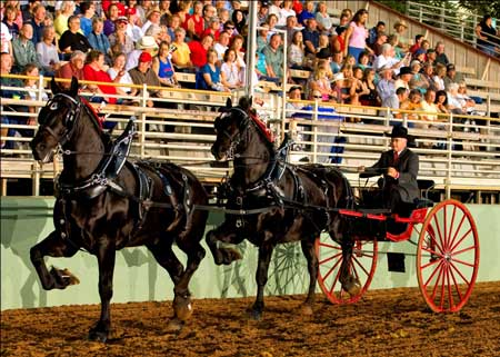 Dan Simpson - Photo courtesy of Nevada County Fair