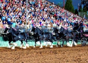 Arlin Wareing and his Shires perform at the 25th annual Draft Horse Classic. Wareing, of Blackfoot, Idaho, was the winner of the Six-Up Ultimate Hitch Championship.